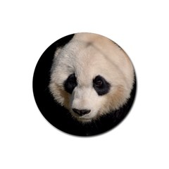 Adorable Panda Drink Coasters 4 Pack (Round)