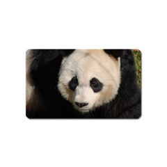 Adorable Panda Magnet (Name Card)
