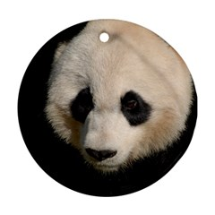 Adorable Panda Round Ornament (two Sides)