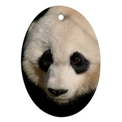 Adorable Panda Oval Ornament (Two Sides)