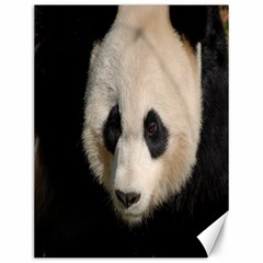 Adorable Panda Canvas 12  x 16  (Unframed)