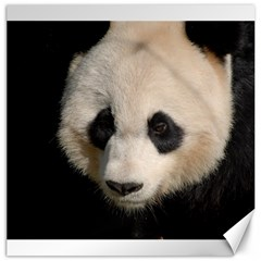 Adorable Panda Canvas 20  x 20  (Unframed)