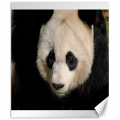 Adorable Panda Canvas 20  X 24  (unframed)