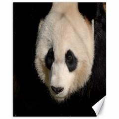 Adorable Panda Canvas 11  X 14  (unframed)
