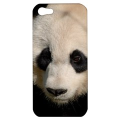 Adorable Panda Apple iPhone 5 Hardshell Case