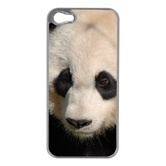 Adorable Panda Apple iPhone 5 Case (Silver)