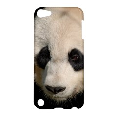 Adorable Panda Apple Ipod Touch 5 Hardshell Case