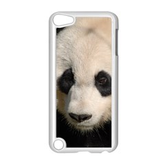 Adorable Panda Apple iPod Touch 5 Case (White)