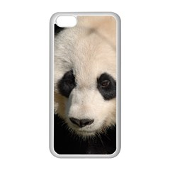 Adorable Panda Apple iPhone 5C Seamless Case (White)