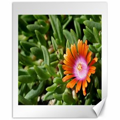 Iceplant2 Canvas 16  x 20  (Unframed)