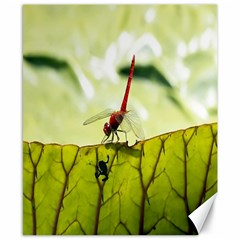Dragonfly Canvas 8  x 10  (Unframed)