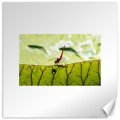 Dragonfly Canvas 12  x 12  (Unframed)