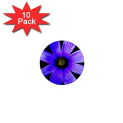 Purple Bloom 1  Mini Button Magnet (10 Pack)