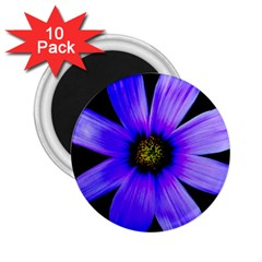 Purple Bloom 2.25  Button Magnet (10 pack)
