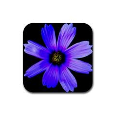 Purple Bloom Drink Coasters 4 Pack (Square)
