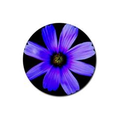 Purple Bloom Drink Coasters 4 Pack (Round)