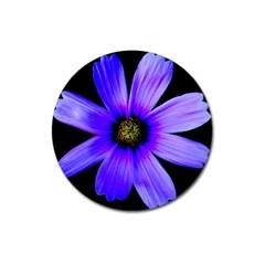 Purple Bloom Magnet 3  (round)