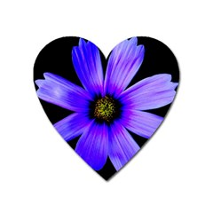 Purple Bloom Magnet (Heart)