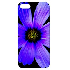 Purple Bloom Apple Iphone 5 Hardshell Case With Stand