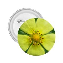 Yellowwildflowerdetail 2 25  Button