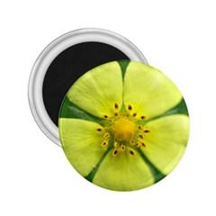 Yellowwildflowerdetail 2.25  Button Magnet