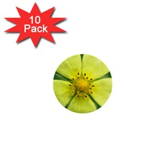 Yellowwildflowerdetail 1  Mini Button (10 pack)