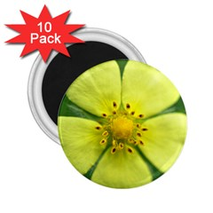 Yellowwildflowerdetail 2.25  Button Magnet (10 pack)