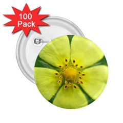Yellowwildflowerdetail 2.25  Button (100 pack)