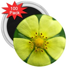 Yellowwildflowerdetail 3  Button Magnet (100 Pack)