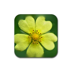 Yellowwildflowerdetail Drink Coasters 4 Pack (Square)