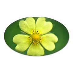 Yellowwildflowerdetail Magnet (oval)