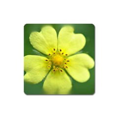 Yellowwildflowerdetail Magnet (Square)
