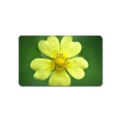 Yellowwildflowerdetail Magnet (Name Card)