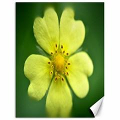 Yellowwildflowerdetail Canvas 18  X 24  (unframed)