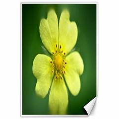 Yellowwildflowerdetail Canvas 24  x 36  (Unframed)
