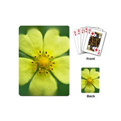 Yellowwildflowerdetail Playing Cards (Mini)