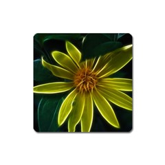 Yellow Wildflower Abstract Magnet (Square)