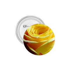 Yellow Rose Curling 1 75  Button