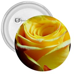 Yellow Rose Curling 3  Button
