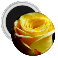 Yellow Rose Curling 3  Button Magnet