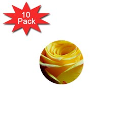 Yellow Rose Curling 1  Mini Button (10 pack)