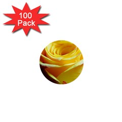 Yellow Rose Curling 1  Mini Button (100 Pack)