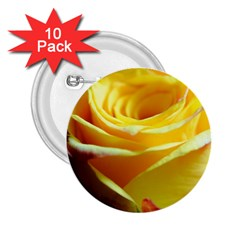Yellow Rose Curling 2.25  Button (10 pack)