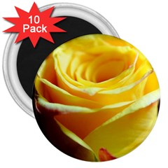 Yellow Rose Curling 3  Button Magnet (10 pack)