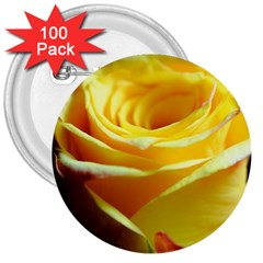 Yellow Rose Curling 3  Button (100 Pack)