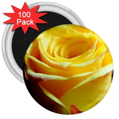 Yellow Rose Curling 3  Button Magnet (100 pack)