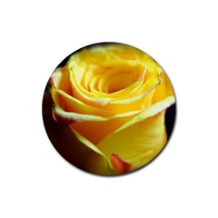 Yellow Rose Curling Drink Coasters 4 Pack (Round)