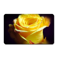 Yellow Rose Curling Magnet (Rectangular)