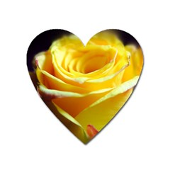 Yellow Rose Curling Magnet (heart)