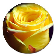 Yellow Rose Curling Magnet 5  (Round)